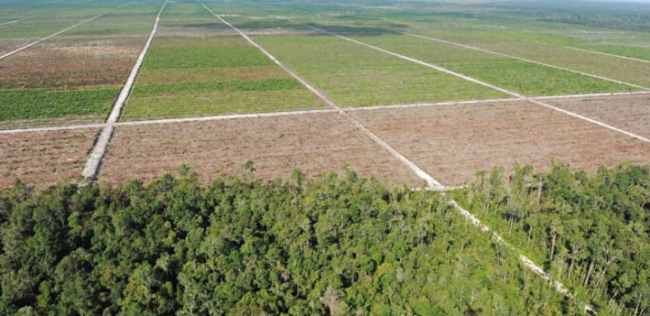 Embracing Green Infrastructure in Indonesia