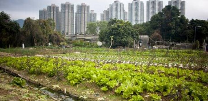 Farmland conversion into residential developments being studied